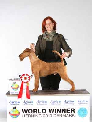 Merrymac Copyright (Dearg Madra´s Eli Eli Oh x Merrymac Lacking Nothing) Weltsieger & Rassebester Irish Terrier & Group Finalist  handled by Karina Grüttner