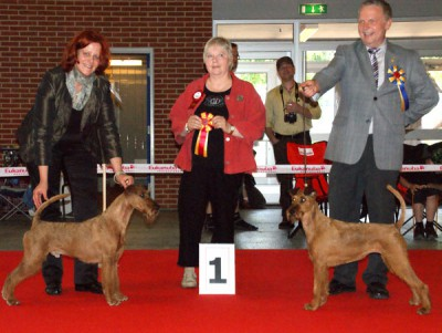 Best of Breed: Merrymac Copyright Best Opposite Sex: Irish Fellow Fairytale Richterin Birgit Seloy (DK)  Foto: Hans Lundby