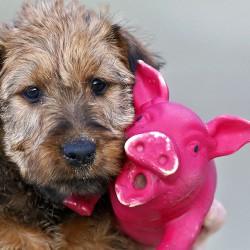 Das rosa Tier kommt mit!
