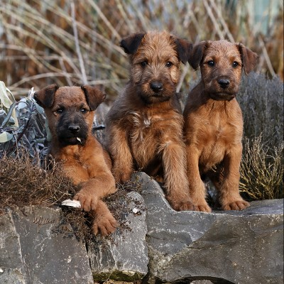 Huckleberry Finn, Halvar & Henry