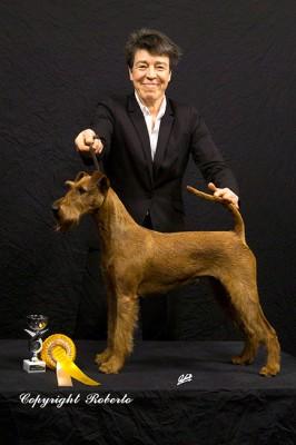 CACIB-Chemnitz2014-BOB1-Scooby[1] Scooby-Doo Silvester von der Emsmühle (Napoletano von der Emsmühle x Irish Fellow Empire)