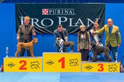 Rosalind von der Emsmühle, Rassebeste und 2. Platz in der Terriergruppe