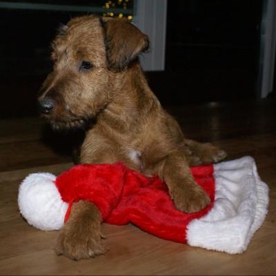 Eddie wartet auf den Weihnachtsmann!