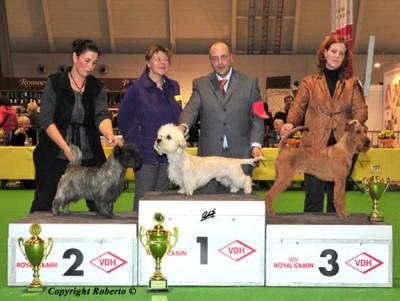 3. Platz in der Terriergruppe Maximo von der Emsmühle Richterin: Doppelreiter (A)