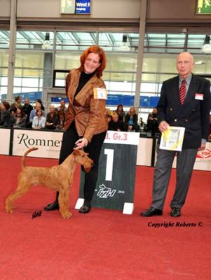 Maximo von der Emsmühle Sieger der Terriergruppe, CACIB Hannover Richter: Dr. Wilfried Peper