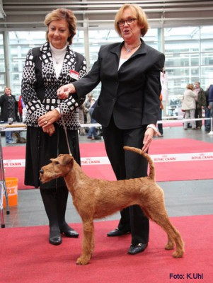 Maximo von der Emsmühle ( Merrymac Copyright x Gabbana v.d. Emsmühle ) Best of Breed, CAC/CACIB