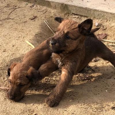 Action im Sand, Lebensfreude pur!