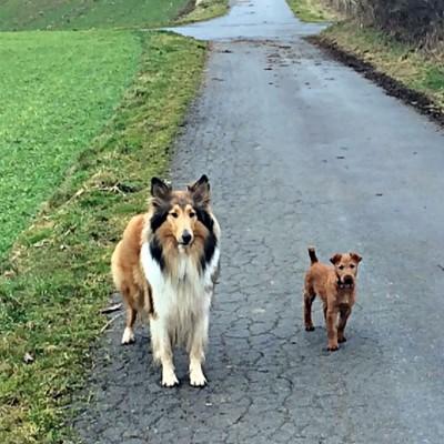 Die Motte – Neue Freundschaft!