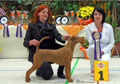 Bester Junghund der Schau MAXIMO VON DER EMSMÜHLE, Richterin: B. Kremser (SLO), Foto: Ackermann