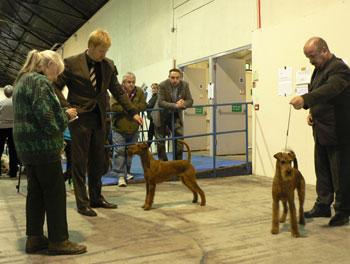 Impressionen von der Ausstellung: Ann Bradley bei der Entscheidung zum Dog CC