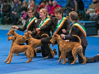 Zuchtgruppe_600[1]  Zuchtgruppe Irish Terrier von der Emsmühle 1. Platz