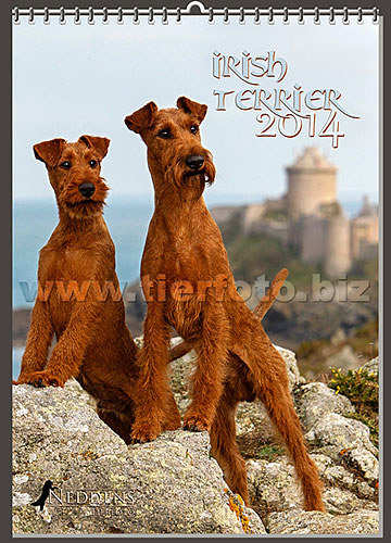 irish-terrier-kalender-2017