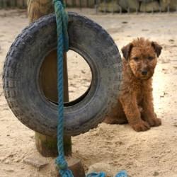 Ich bewache den Reifen