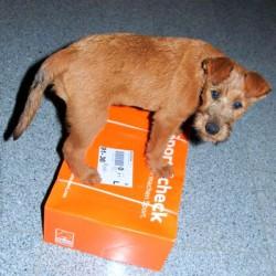 Wicky kontrolliert ab sofort die Post